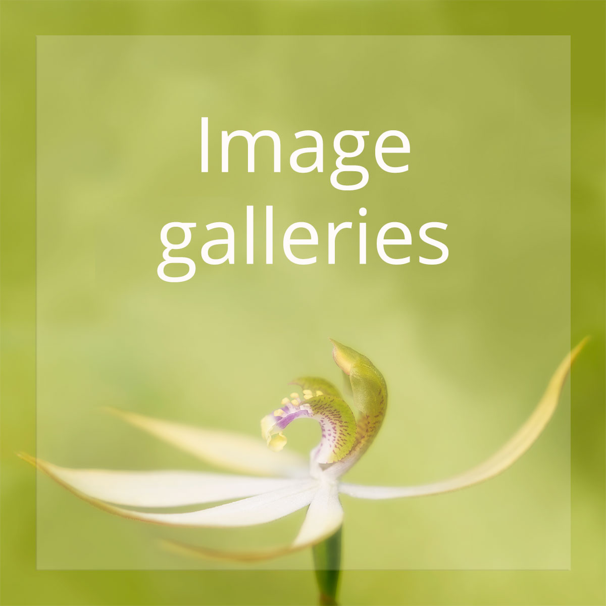 Visit the Beasts & Blossoms image galleries