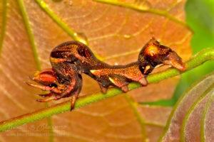 Caterpillar, Thailand