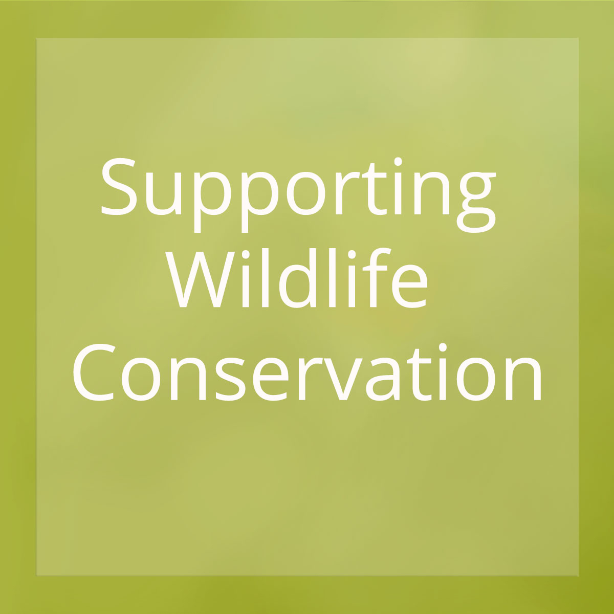 Learn more about how Beasts & Blossoms supports wildlife conservation