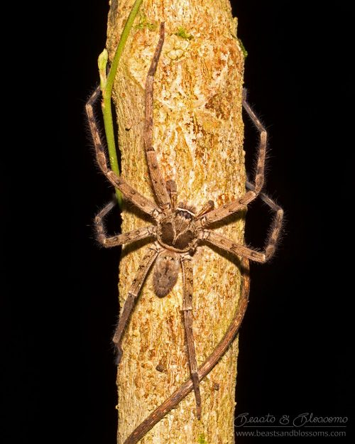 Spider, southern Thailand